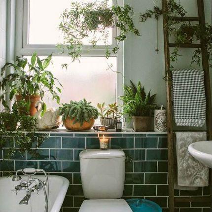 Plantas en el baño, frescor en tu vida